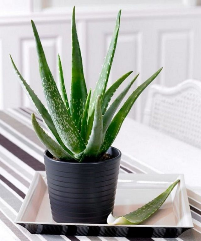 14 Best Houseplants For A Restful Sleep Balcony Garden Web
