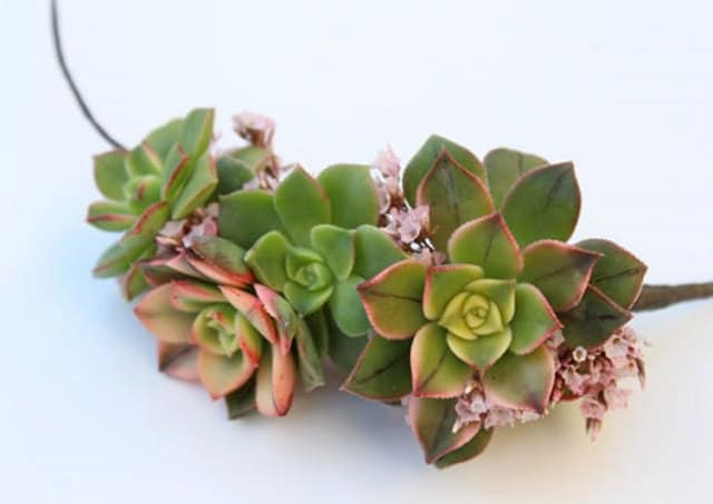 how-to-make-a-succulent-crown-3