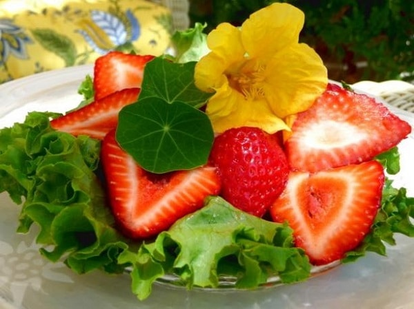 nasturtium-flowers-in-salad