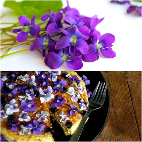 13 Great Edible Flowers To Flavor Your Food Improve Your Health