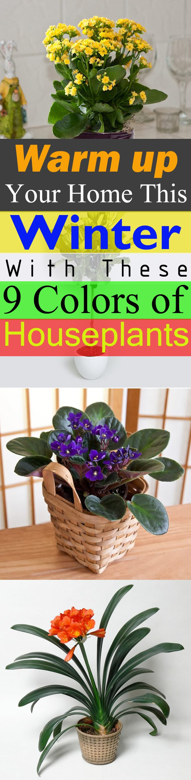 9 different colors of houseplants and how they impact your lifestyle! Learn about them and bring them in to beat the winter blues!