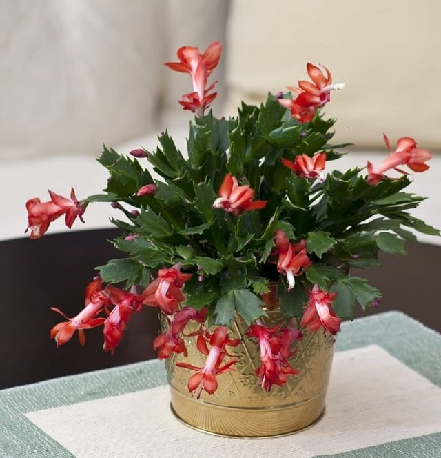 Most Attractive Houseplants for Decorative Purpose 4
