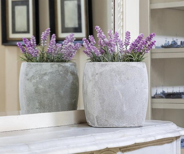 grow-lavender-indoor-for-better-sleep