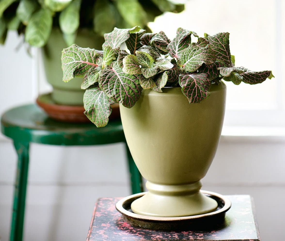 Container House Design: 29 Most Beautiful Houseplants You Never Knew About