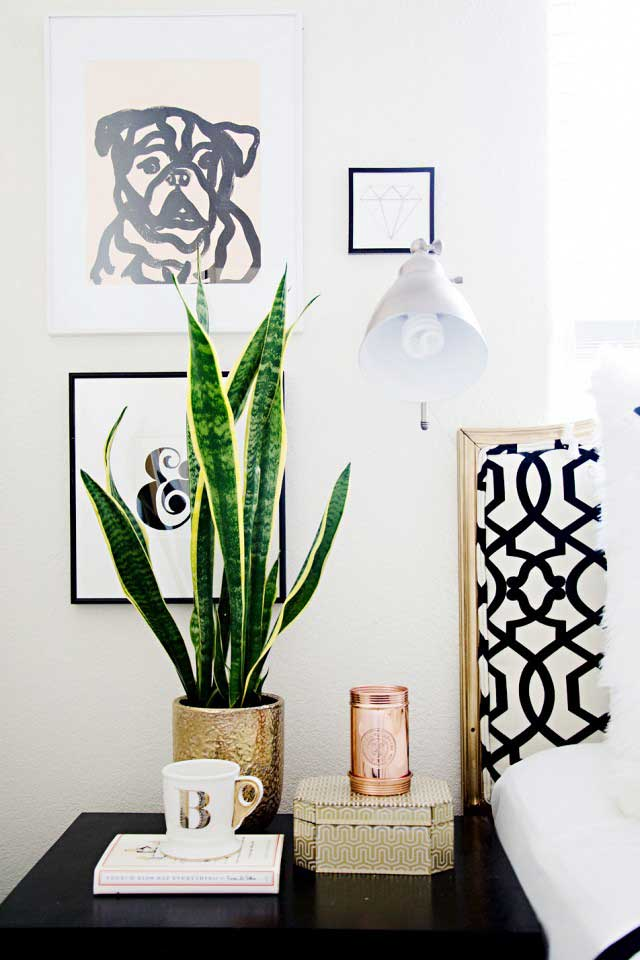 snake-plant-in-bedroom