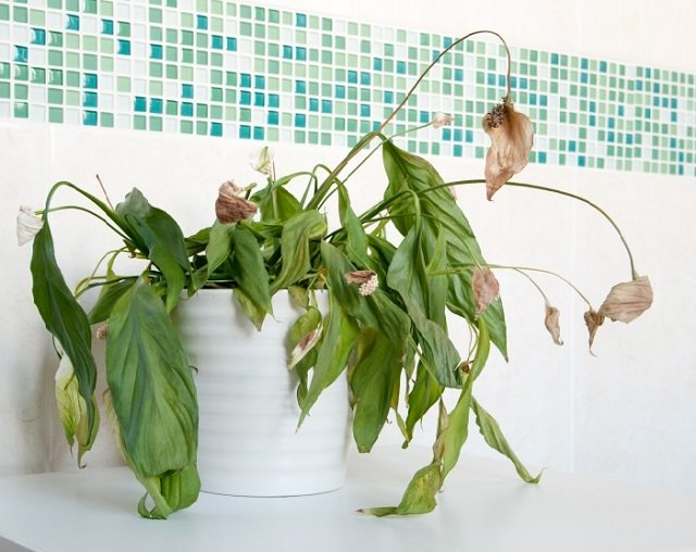 avoid-these-9-mistakes-your-indoor-plants-wont-die-again-2