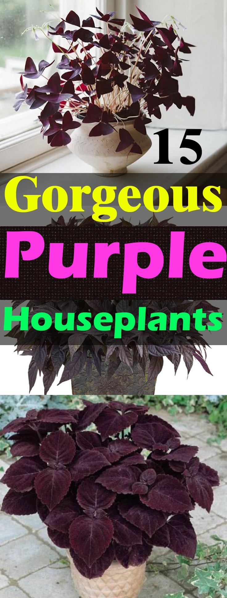Love the color purple? Then grow these 15 GORGEOUS purple houseplants known for their colorful foliage and warm texture!