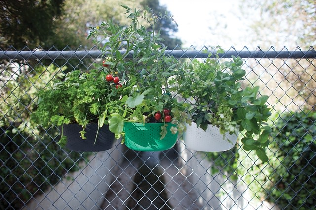 how-to-start-the-urban-garden-this-holiday-4