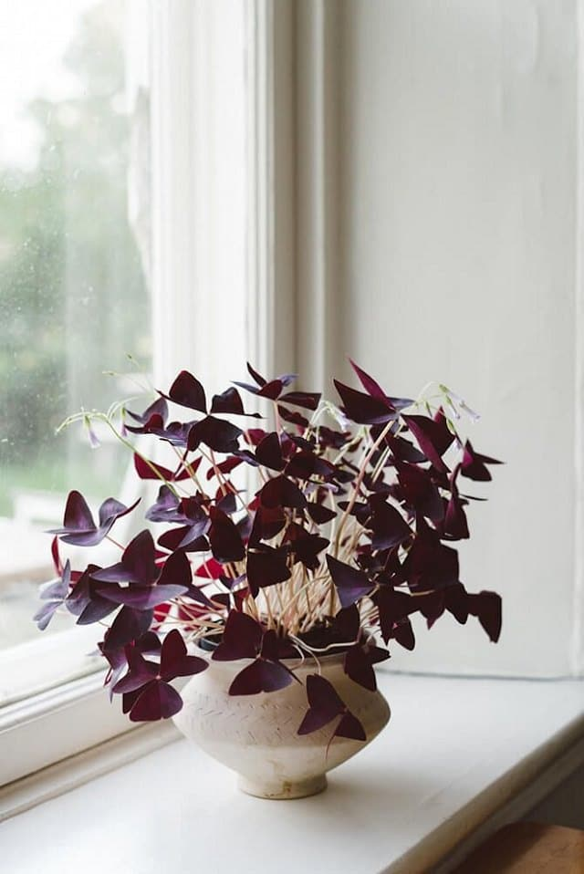 Gorgeous Purple Houseplants