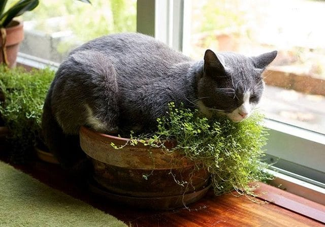indoor-cat-garden-3