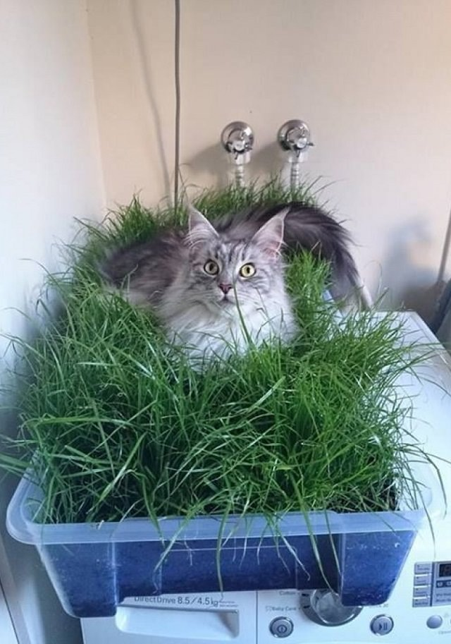 indoor-cat-garden