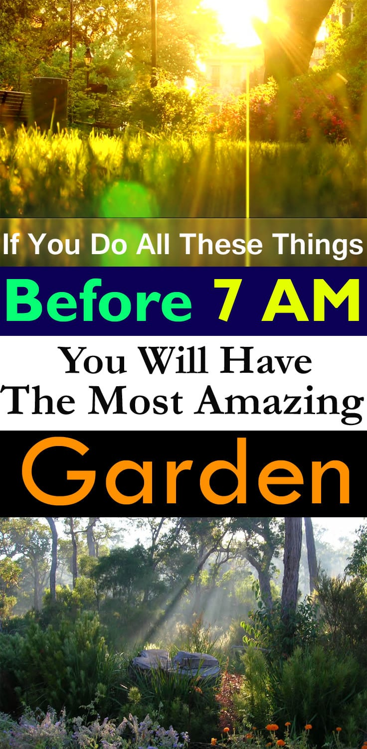 Do a few of these chores in your garden in the EARLY morning, and you'll see incredible results in no time!