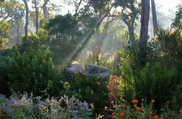 if-you-do-all-these-things-before-7am-you-will-have-the-most-amazing-garden-3