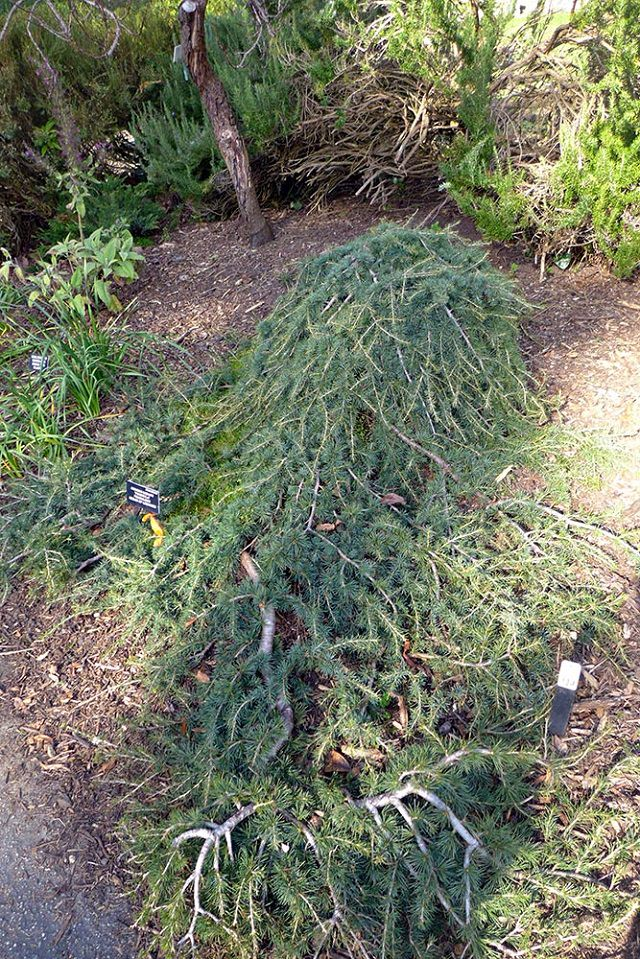 what-to-do-with-dead-christmas-tree-12