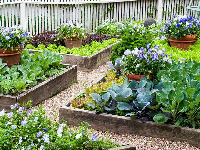 raised_bed edible garden