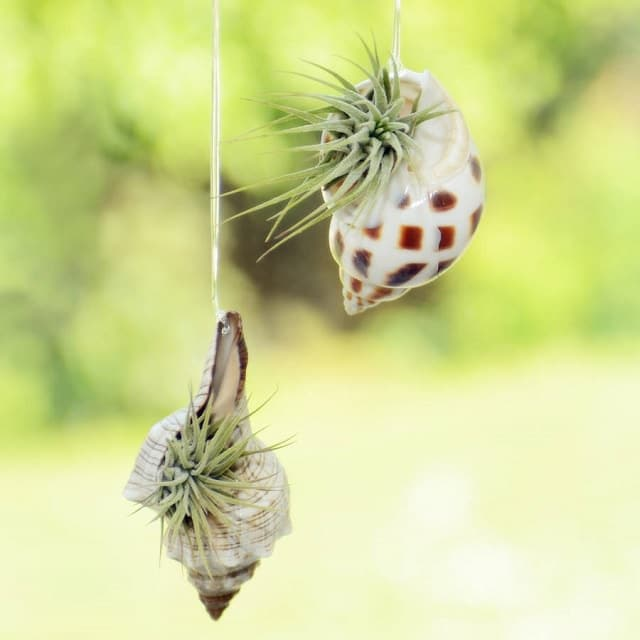 seashell hanging planter