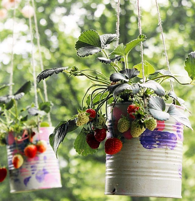 Diy Hanging Strawberry Planter