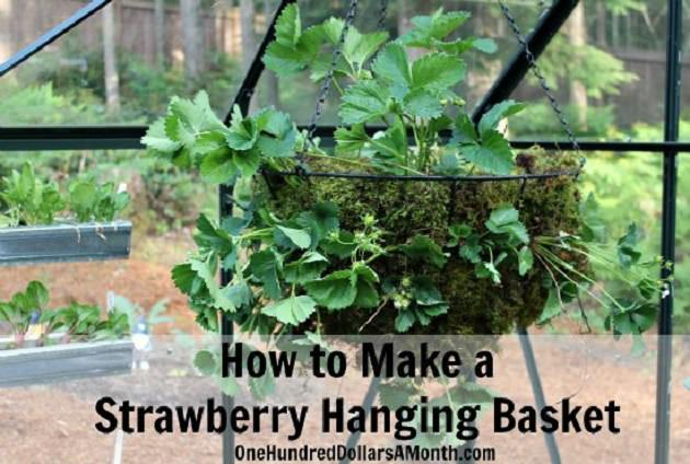 Strawberry Hanging Basket