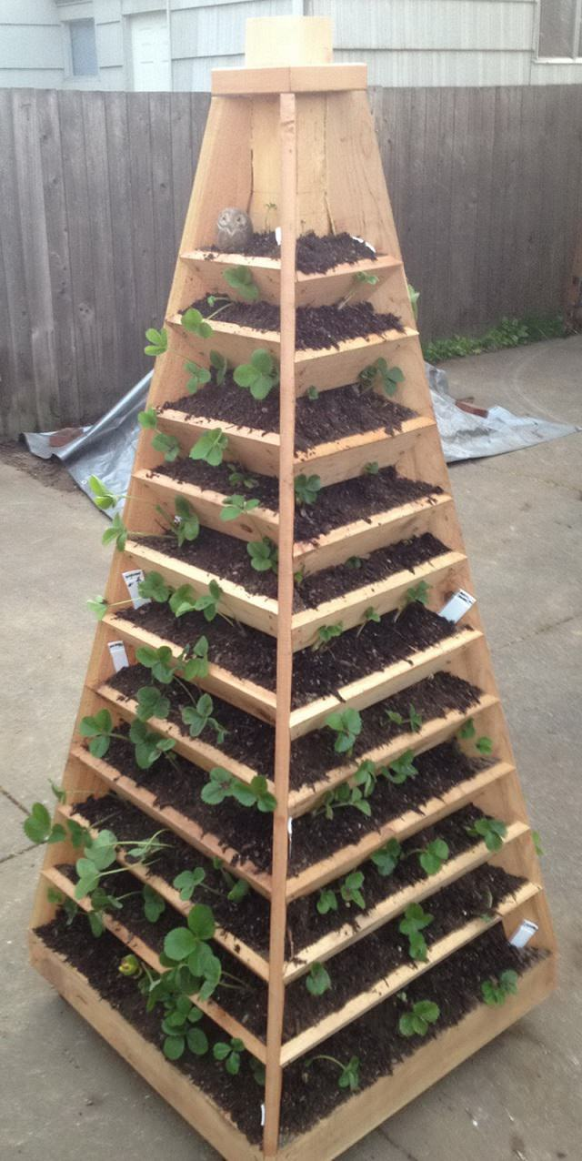Vertical Strawberry Pyramid