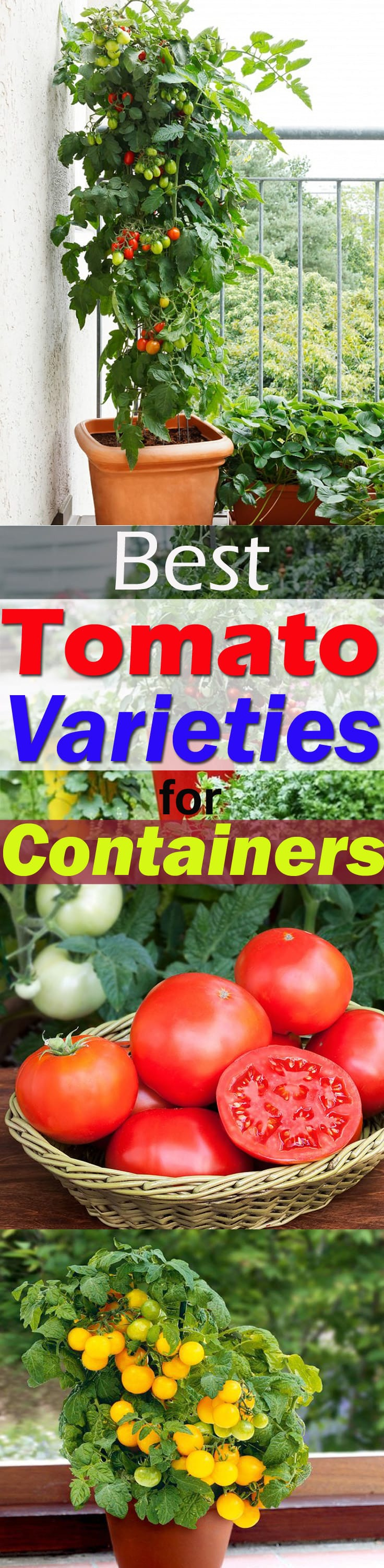 It is possible to grow tomatoes in pots, but there are a few BEST TOMATO VARIETIES FOR CONTAINERS that are easy to grow, taste great and produce heavily. Check out!