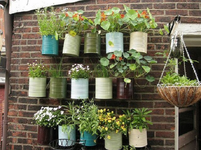 hanging basket ideas