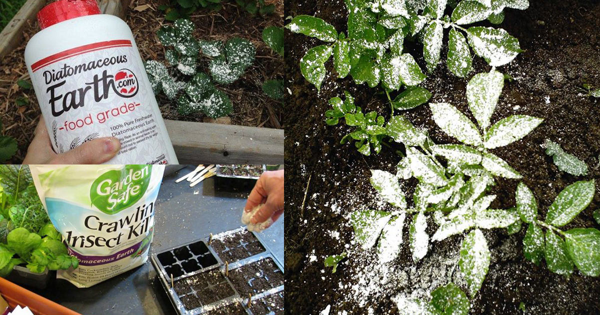 If You Re A Gardener Learn About These 13 Diatomaceous Earth Uses Balcony Garden Web
