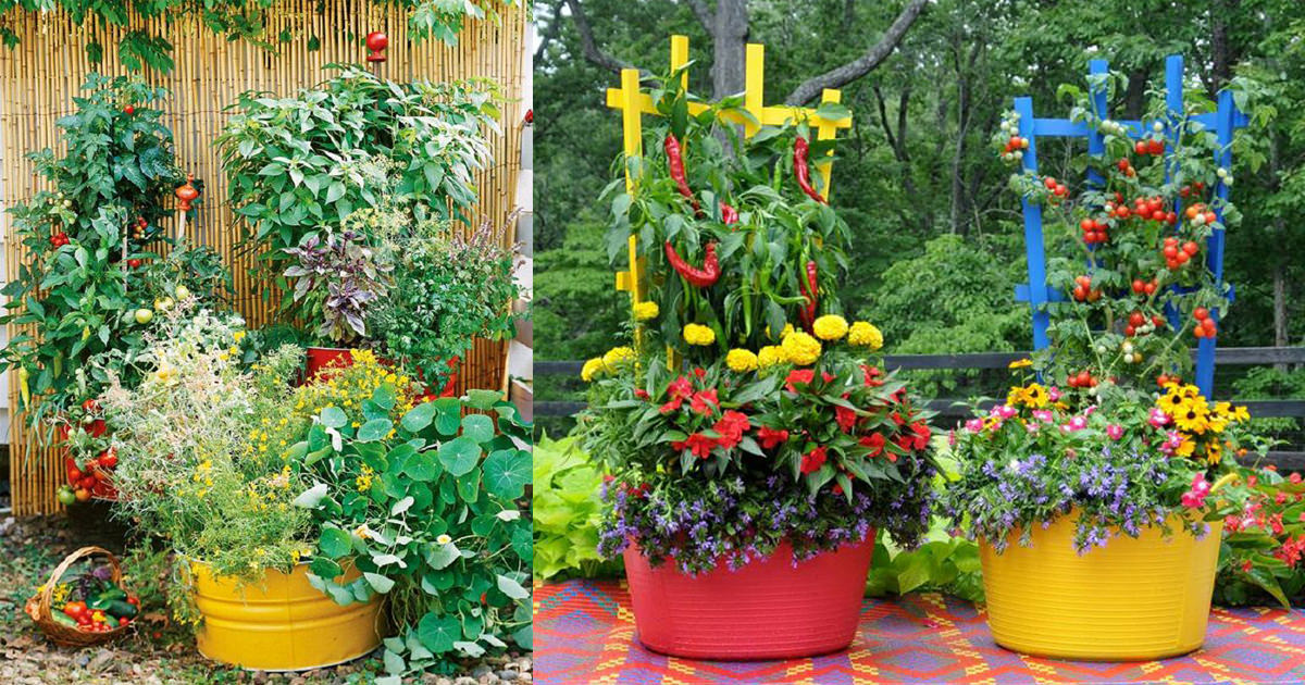 15 Stunning Container Vegetable Garden Design Ideas U0026 Tips | Balcony Garden  Web