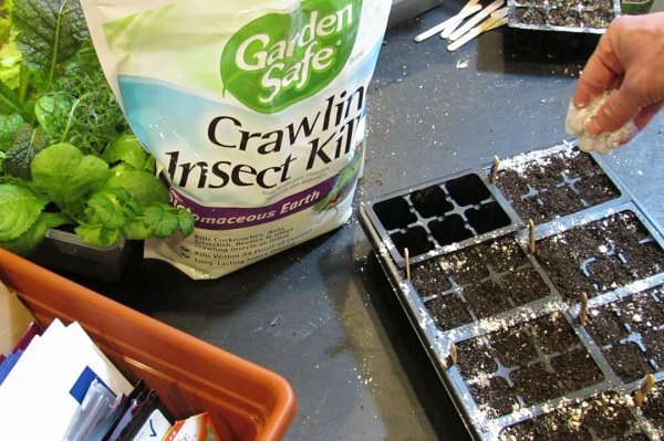 Amazing Uses of Diatomaceous Earth in the Garden 2