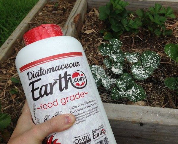 Amazing Uses of Diatomaceous Earth in the Garden 6