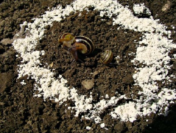Amazing Uses of Diatomaceous Earth in the Garden