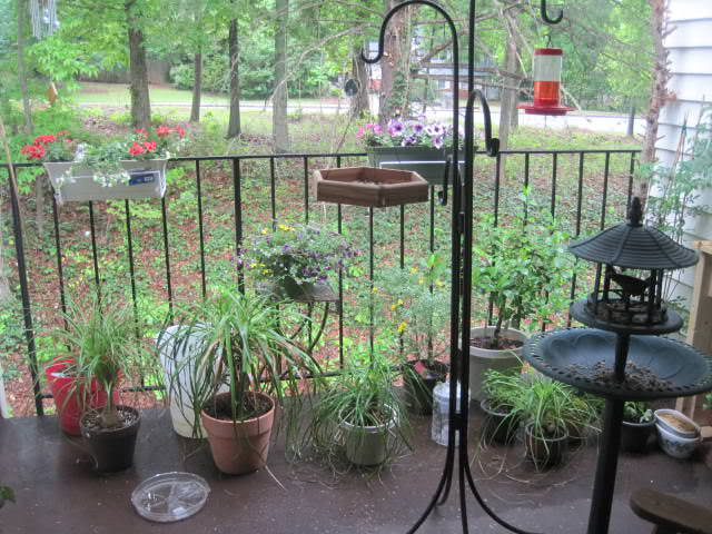 Plants and bird feeders share space on this small balcony Image Credit: Vetsy's View
