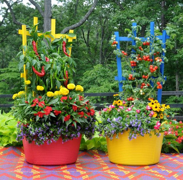 Vegetable Garden Idea colorful vegetable garden