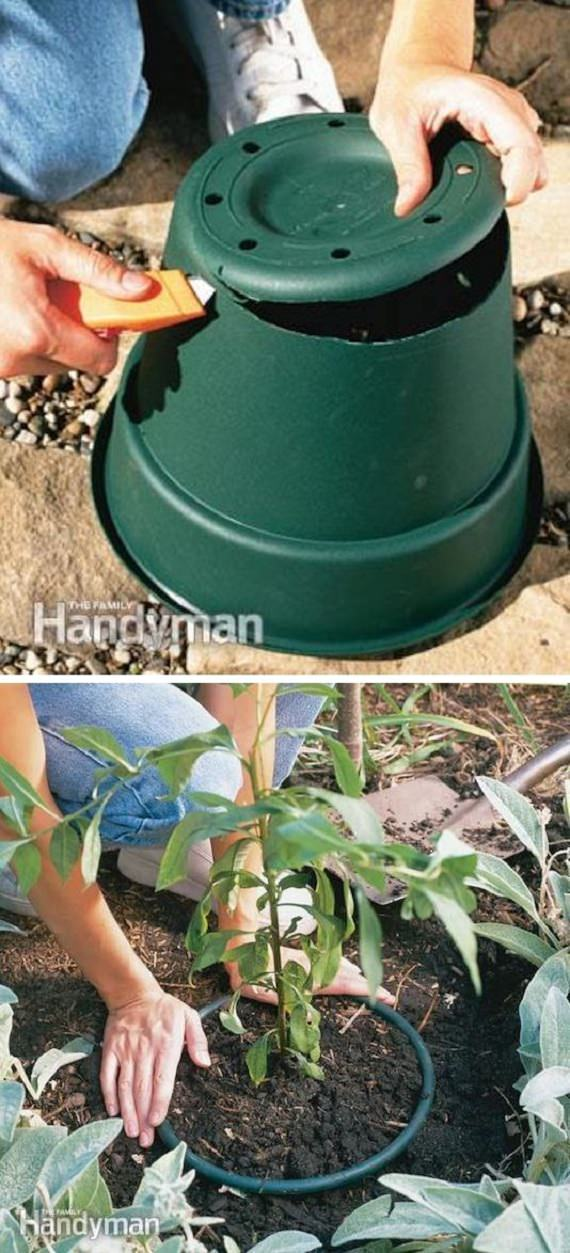 diy invasive plant control