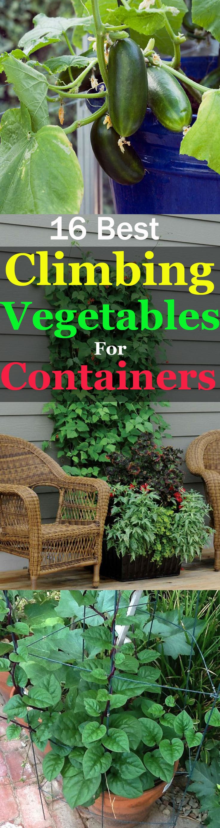 Take a look at this informative list of best climbing and vining vegetable for containers. These vegetables are productive and take your vertical space to grow!