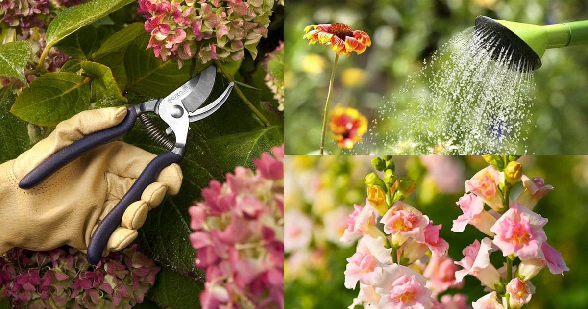 These Amazing Tips Will Keep Your Plants Blooming Continuously And