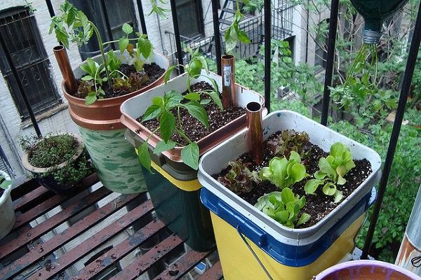 14 Best Diy Self Watering Container Garden Ideas Balcony