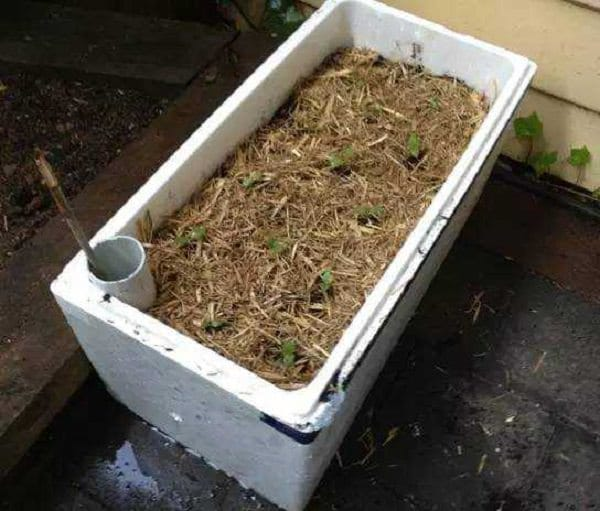 diy self watering container garden ideas 13