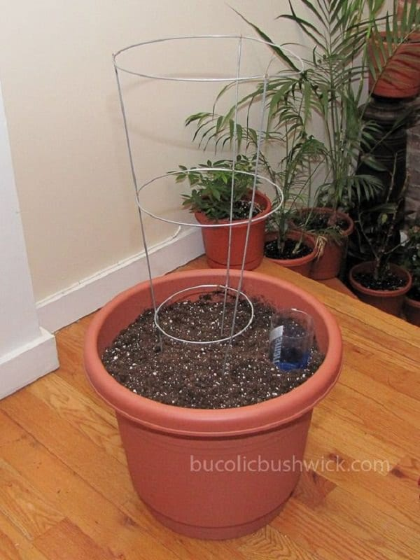 diy self watering container garden ideas 6