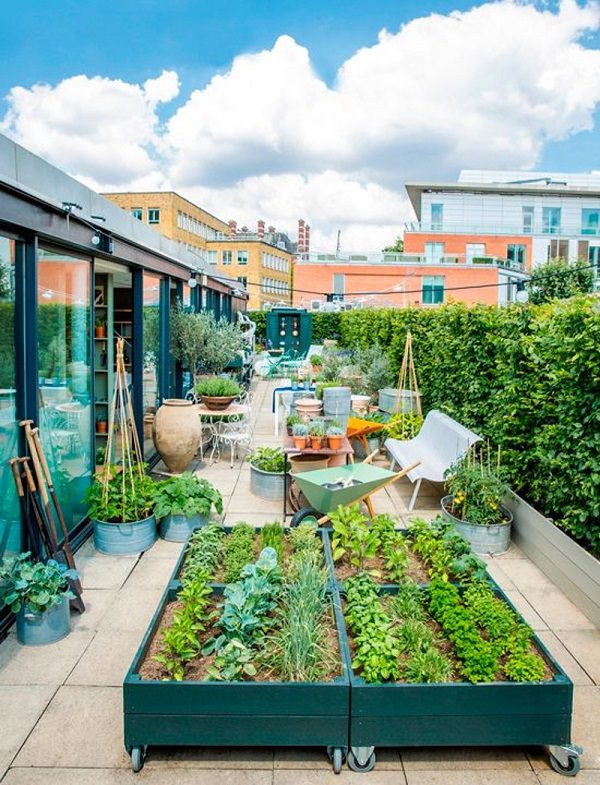 Great Roof Garden Ideas