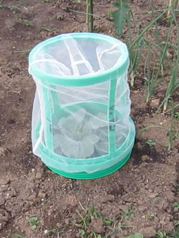 If You Have a Few Buckets You Can Use Them These 13 Ways In The