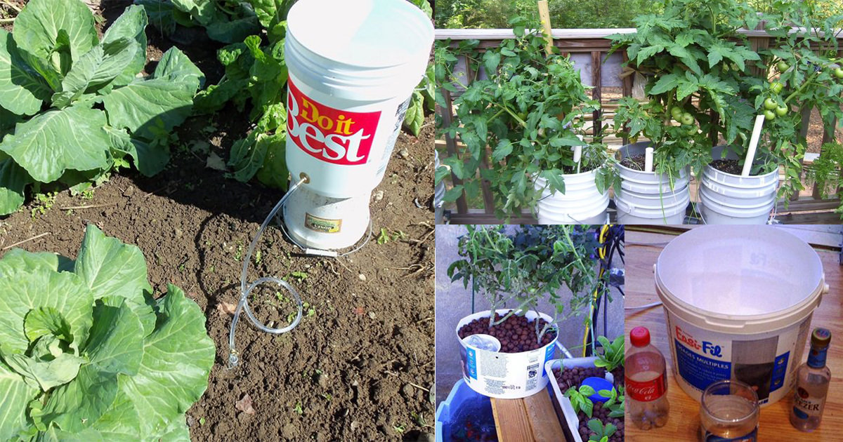 If You Have A Few Buckets You Can Use Them These 13 Ways In The Garden Bucket Uses Balcony Garden Web