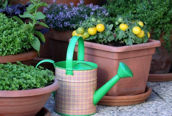take a look at the space youve chosen to start your container vegetable garden - Garden Pots