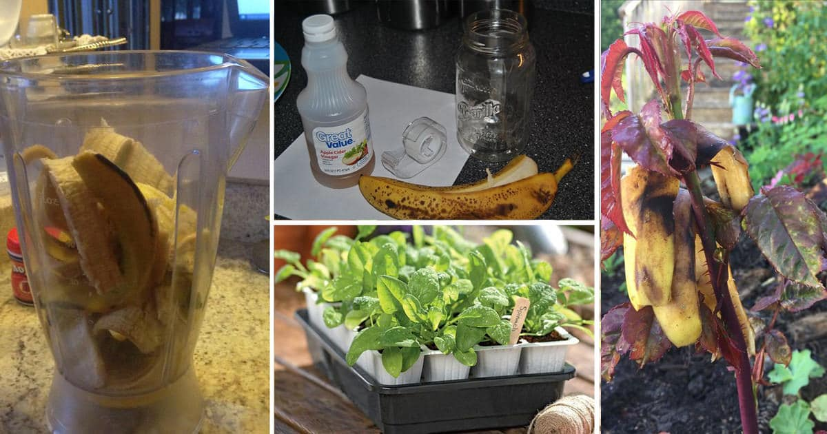 14 Banana Peel Uses In The Garden You Should Know About