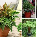 Learn about the 21 Best Ferns for Containers, these beautiful foliage plants available in various shapes, textures, and colors provide interest in shady space!