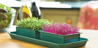 Learn how to grow Microgreens. They are tasty and nutritious. Growing microgreens indoors is also possible. Must check out!