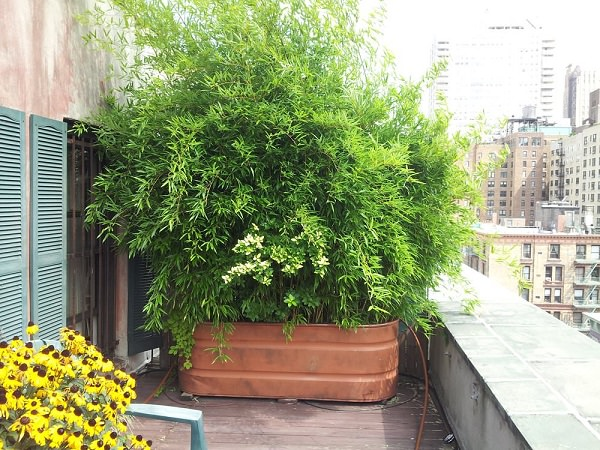 Growing Bushy Potted Plants Gives You The Cover Need It S An Easy Way To Improve Privacy That Also Adds Some Foliage Your Outdoor E