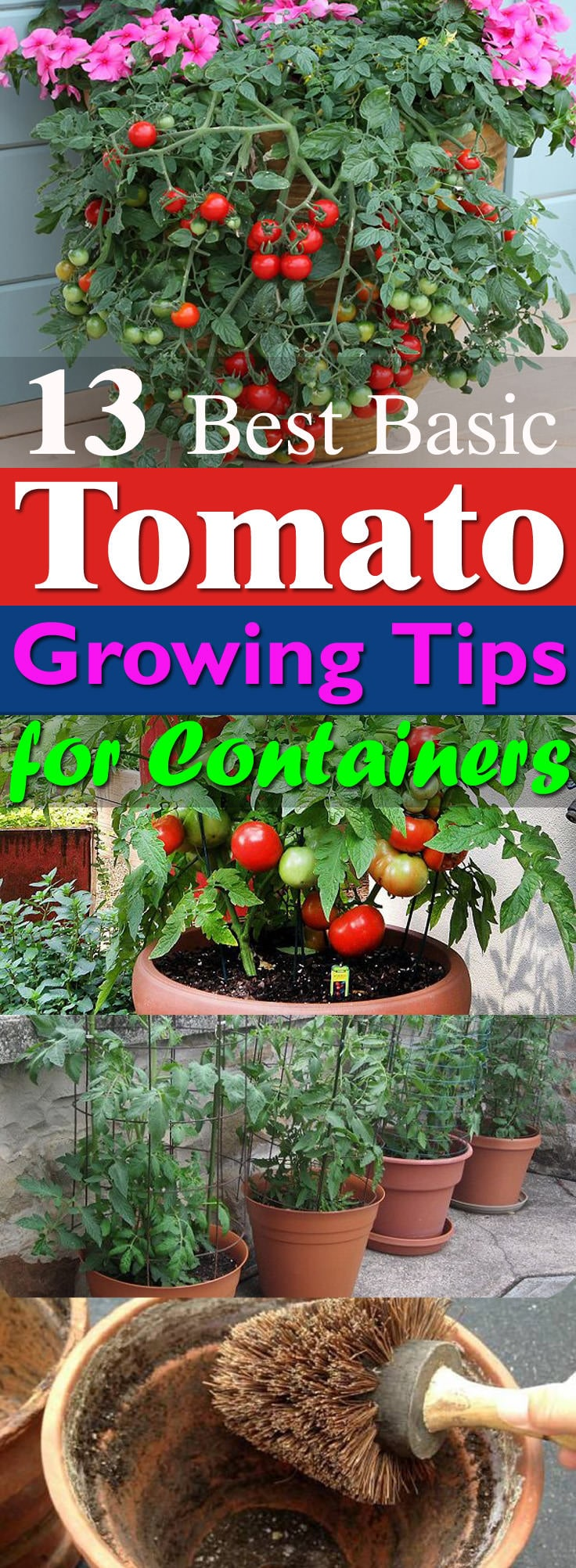 Learn These 13 Basic Tomato Growing Tips For Containers To Grow The Best Red And Juicy