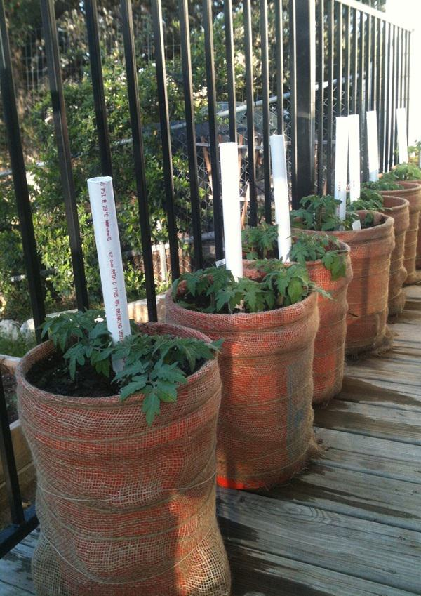 Best Tomato Growing Secrets in Containers that you can suggest