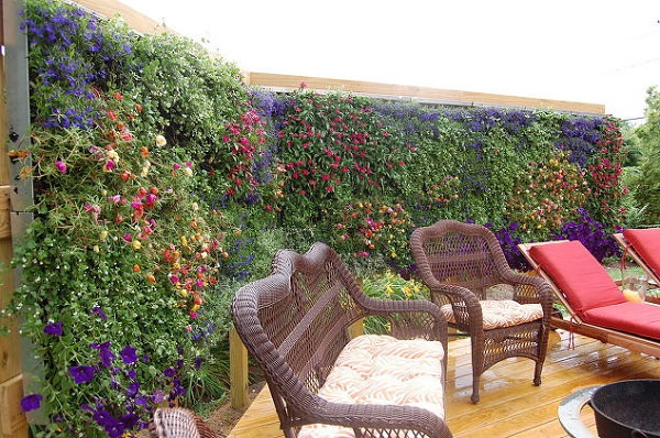 Living Walls for Privacy