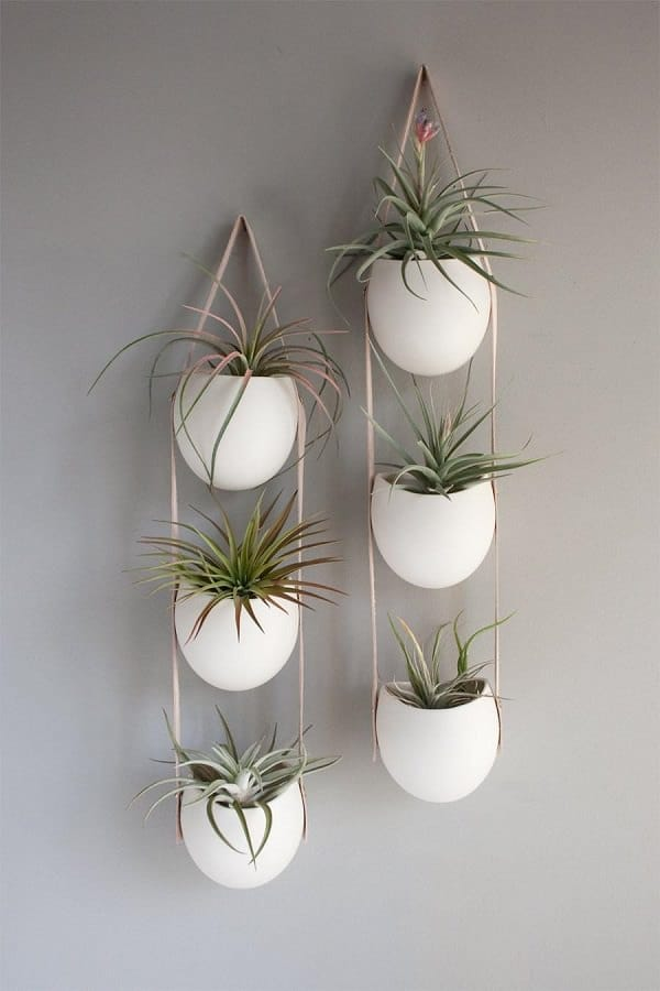 51 Most Amazing Air Plant Display Ideas Balcony Garden Web